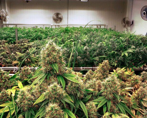 order cannabis